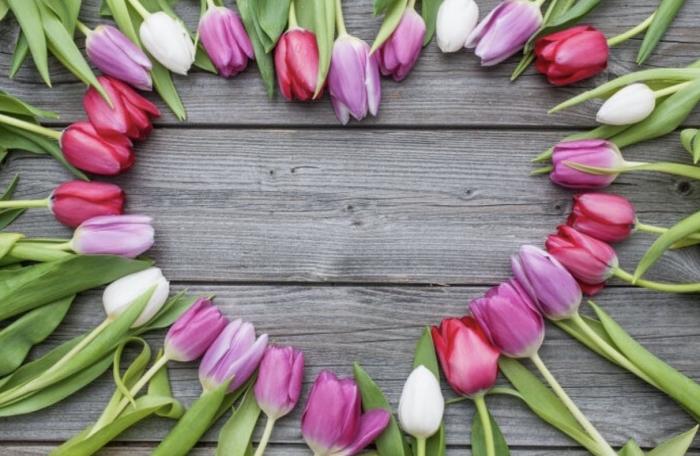 Hơn 3.000 bài thơ tình Phạm Bá Chiểu - Page 20 Hoa-tulip-nguon-goc-va-y-nghia-cua-loai-hoa-dep-nhat-the-gioi-1569254634828